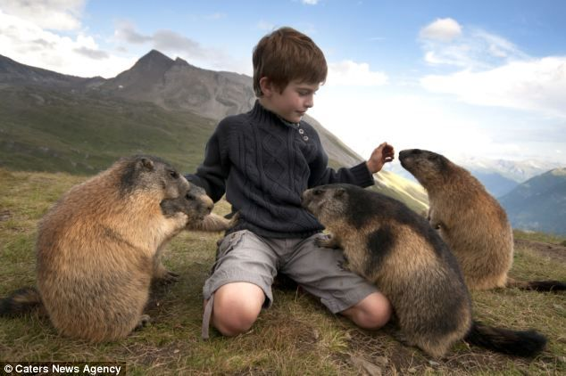 Marmot Whisperer: The marmots gather around Matteo when he arrives and lets him feed them and play with them despite normally running away from humans.  by Rachel McDermott, dailymail.co.uk #Marmot #Matteo_Walch #dailymail
