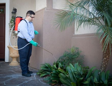 #Brampton #Pest #Management Termax - Have 25 Years Exp. in Wildlife Animal #Control & Pest Management for #Raccoon, #Bird, #Insects, #Cockroach and Squirrel Removal #Services in Toronto, Brampton GTA. Call us for Pest Exterminating 844-583-7629 http://goo.gl/vIK821