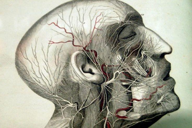 ¿Cuáles son las causas de los daños del nervio vago?. El nervio vago es uno de los 12 nervios craneales, lo que significa que salen de la médula espinal por el cráneo en lugar de a través de la columna vertebral. El nervio vago se conoce como el décimo nervio craneal. Sus funciones incluyen el ...