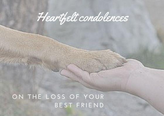 Pet Loss - free printable condolence card suru Pinterest - condolence template