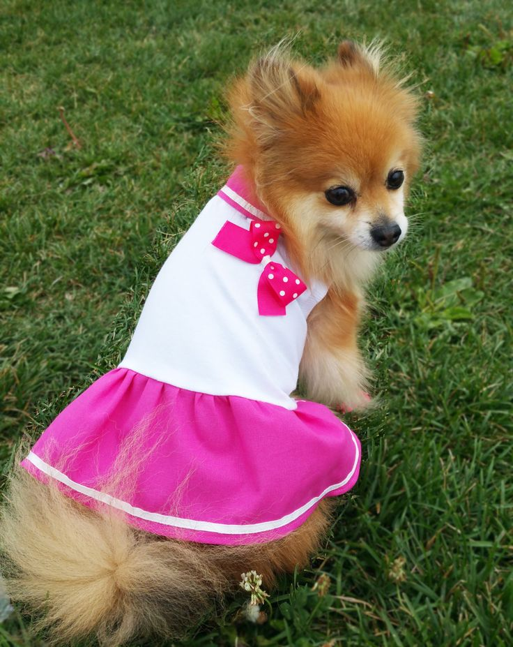 Pink Dog Dress,XS~4XL Size,Halloween costume,dog clothes,small dogs clothes,handmade puppy tshirt, gift for dog, girl dog clothes,dog hoodie by puppydoggyclothes on Etsy