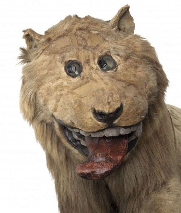 Taxidermy lion made for King Frederick i of Sweden in 1731, by a taxidermist who had never seen a lion before