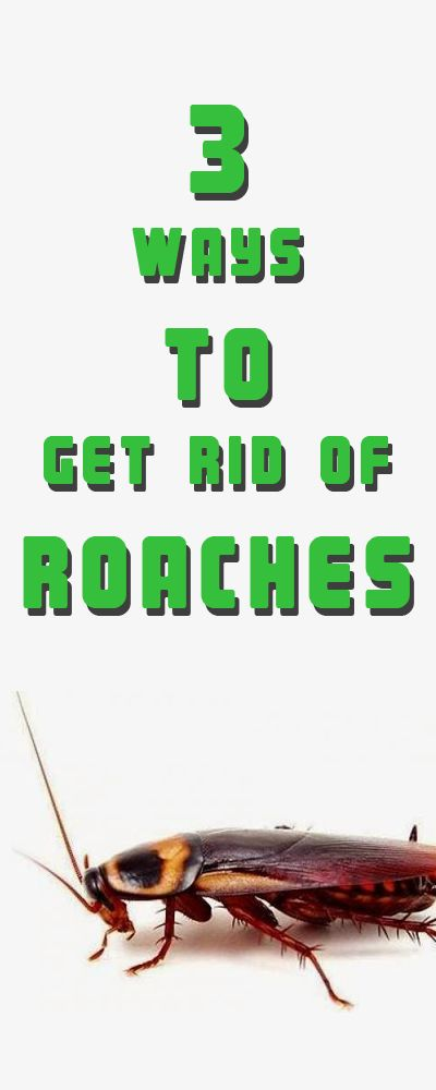 How to Get Rid of Roaches  Roaches, How to get and How to get rid
