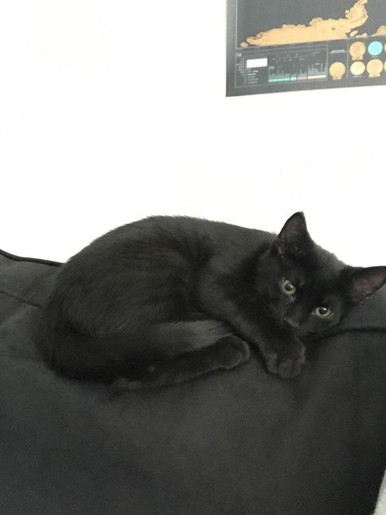 Willst du mehr süße Katzenfotos? Schauen Sie sich unsere Website an, indem Sie auf das Foto #cutecats klicken …   – Haustiere