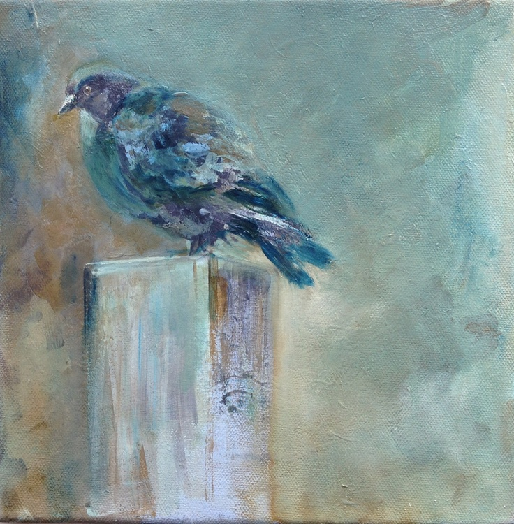cold morning pigeon (in progress)
