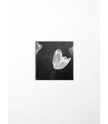 Ritaglio - Sfioritura di Primavera - Livin'Art  natura morta, opera unica, fotografia d'autore