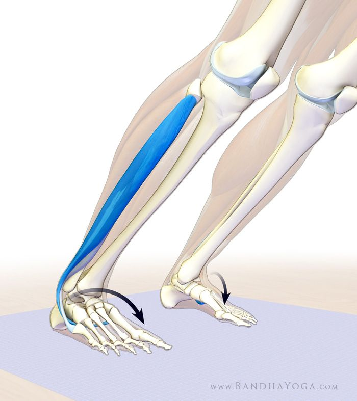 The Daily Bandha: How to Balance Opposites in the Foot and Ankle