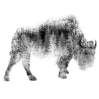 Nostalgic Art - Wild Bison