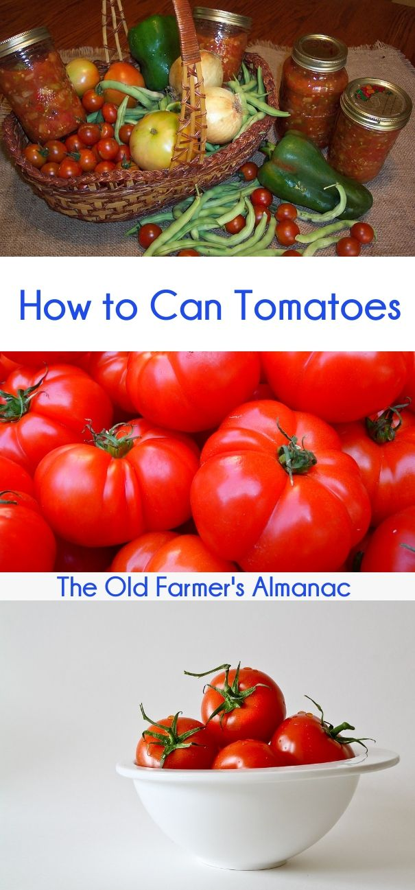 How To Get Rid Of Whiteflies On Tomato Plants Naturally