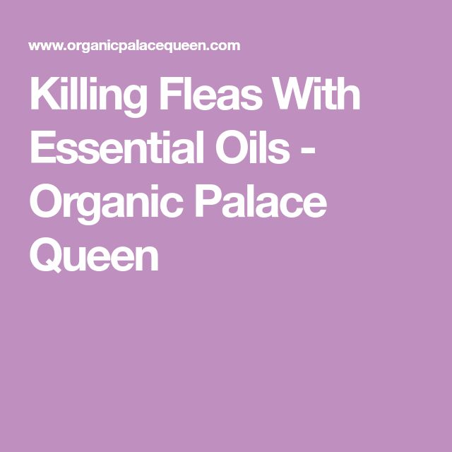 Killing Fleas With Essential Oils - Organic Palace Queen