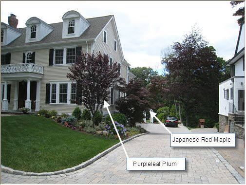 Pics of corner privacy landscaping never underestimate for Small trees for corner of house