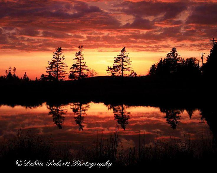 ...Debbie Roberts photography