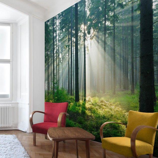 Vliestapete - Enlightened Forest - Fototapete Quadrat
