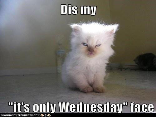 Funny Meme Wednesday : Best wednesday memes images on pinterest good morning