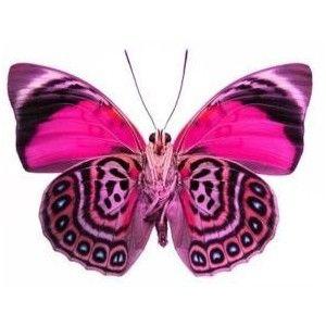 hd cute pink butterfly - photo #20