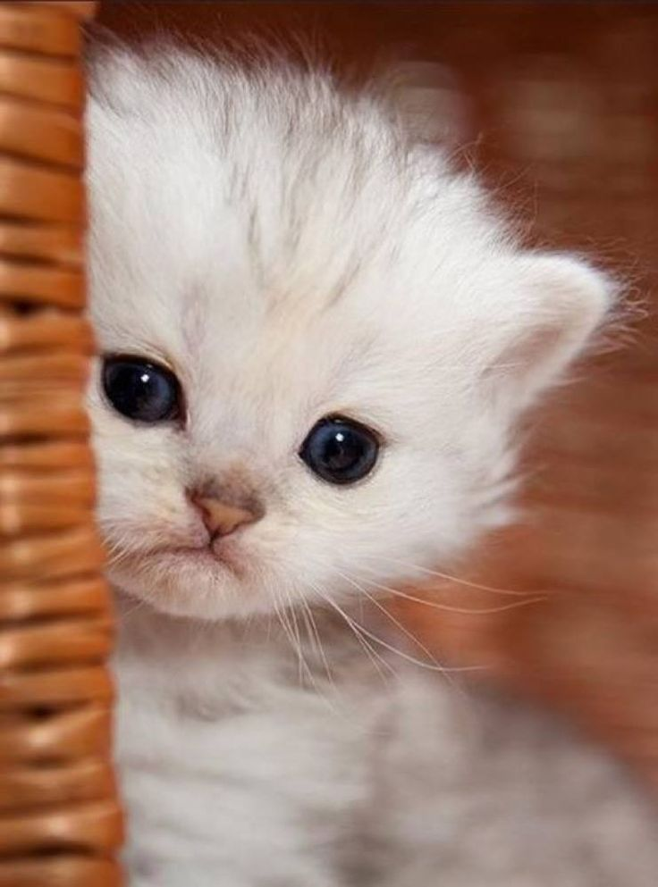 Time for an extremely cute kitten…