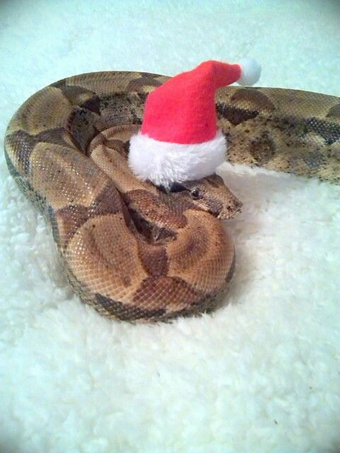 33 Best Snakes In Tiny Clothes Images On Pinterest