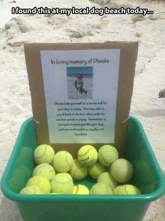 Awesome idea! So gonna do this at our dog park!