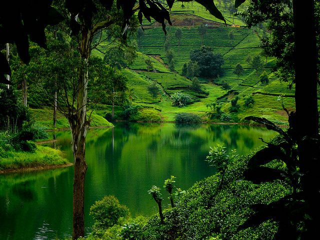 Hills Of Up Country Sri Lanka by dinusha123, via Flickr