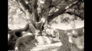 Удивительные корни деревьев.