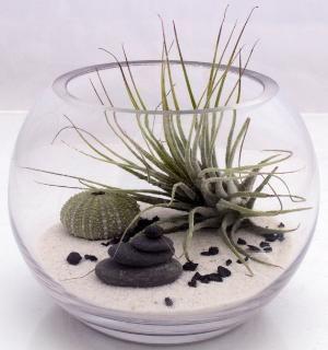 Small desktop zen garden terrarium kit with live by XercesArt