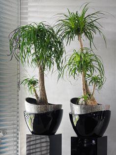 25+ Best Ideas About Hydrokultur Pflanzen On Pinterest ... Zimmerpflanzen Pflege Pflanzenarten