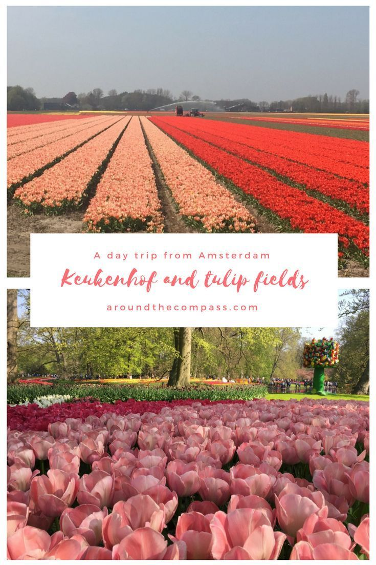 Keukenhof And Tulip Fields Day Trip From Amsterdam