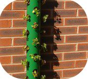What a great verticle gardening idea!