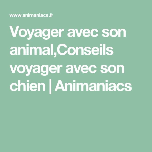 Voyager avec son animal,Conseils voyager avec son chien   Animaniacs