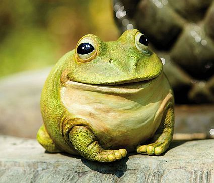 119 Best Frogs Images On Pinterest Frogs Funny Frogs