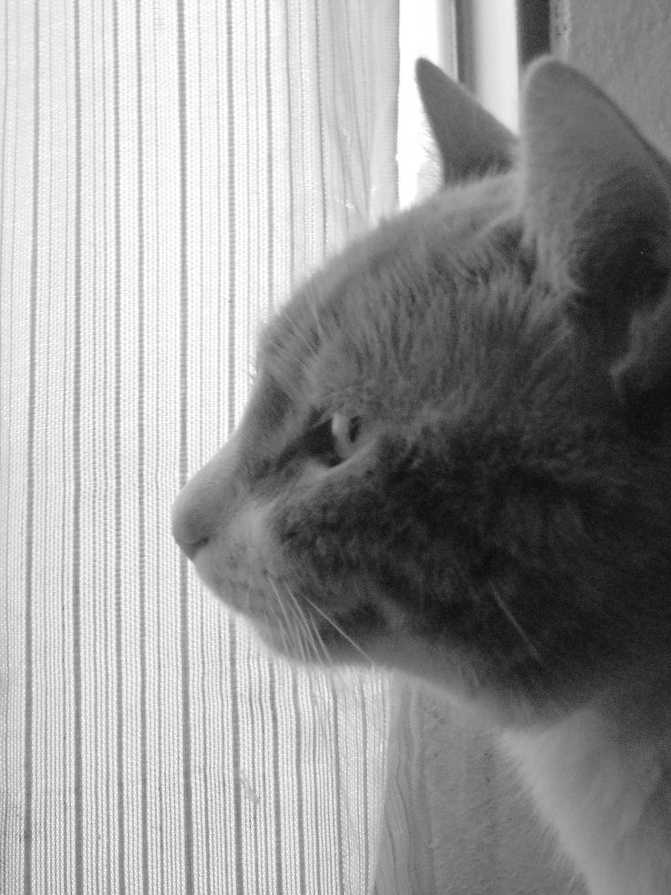 gato cat B/N