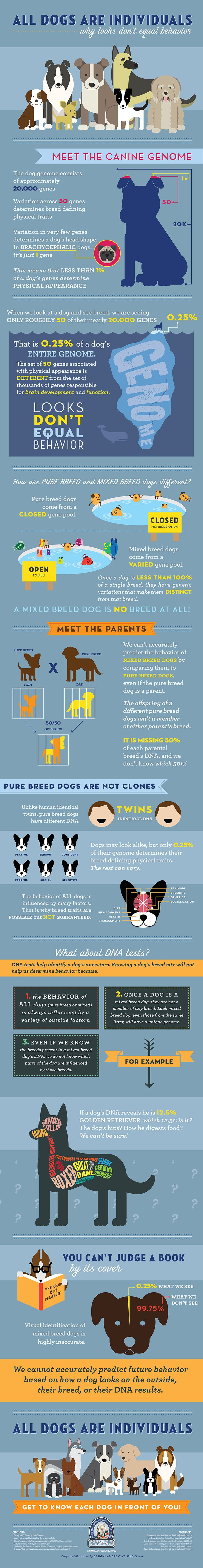 Illustration and infographic design layout for Animal Farm Foundation by Design Lab Creative Studio All Dogs Are Individuals [INFOGRAPHIC]: Why Looks and Breed Don't Equal Behavior