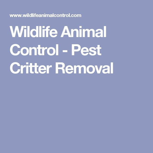Wildlife Animal Control - Pest Critter Removal