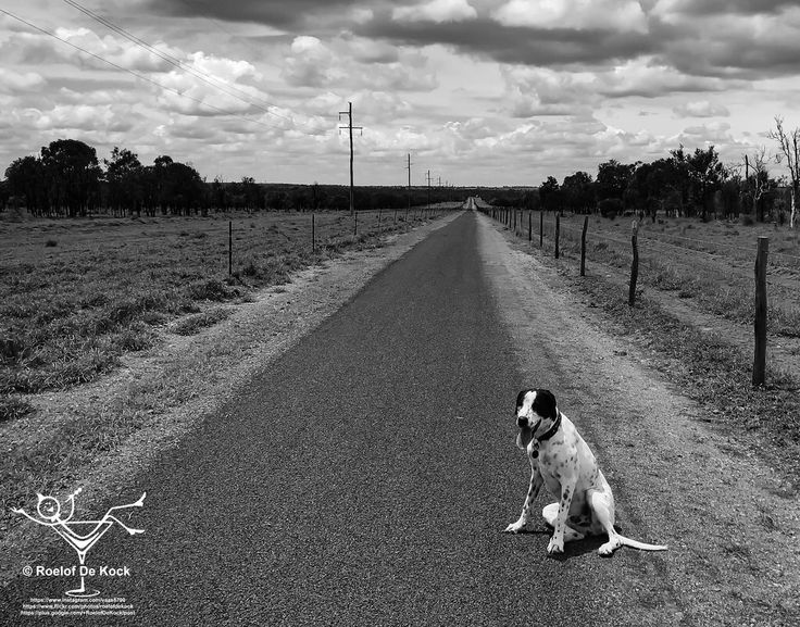 On the Track, Blackwater, Queensland, Australia #vaas8790 #blackwater #sevendayblacknwhitechallenge #thisisqueensland #queensland