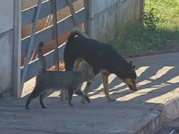 A leishmaniose visceral, conhecida também como calazar, é uma doença causada por protozoários, que tem como seu reservatório natural (em ambientes urbanos) cães e gatos, porém, pode atingir os seres humanos.