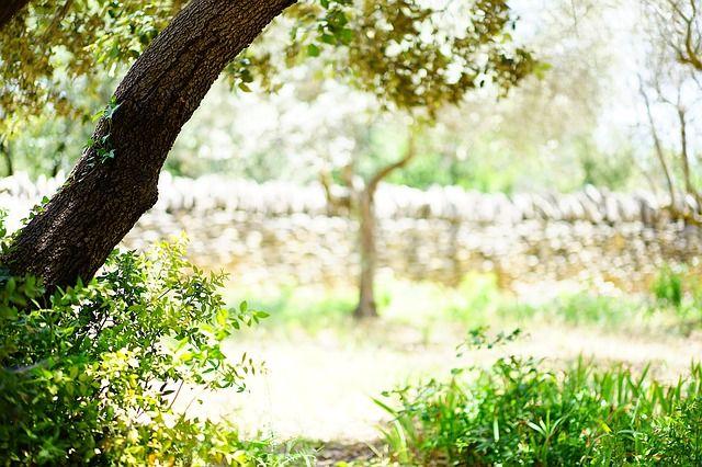 Ya estamos preparando el nuevo post de nuestro #bloguptoyouagency. Os podemos ir adelantando que después de leerlo añadirás a tu lista muchos lugares con encanto donde celebrar cualquier evento. Y todos aquí ⬇️ #uptoyouagency #events #eventoscorporativos #wedding #extremadura #lugaresconencanto