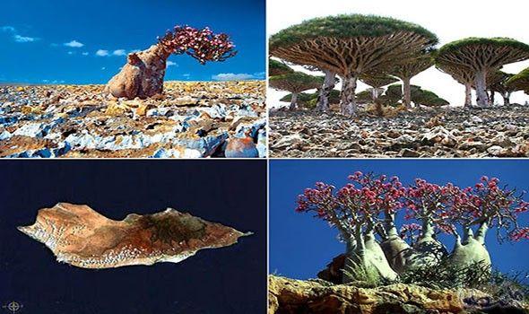 جزيرة سقطرى اليمينية أغرب جزيرة في العالم تحوي كائنات نادرة Amazing Places On Earth Socotra Island