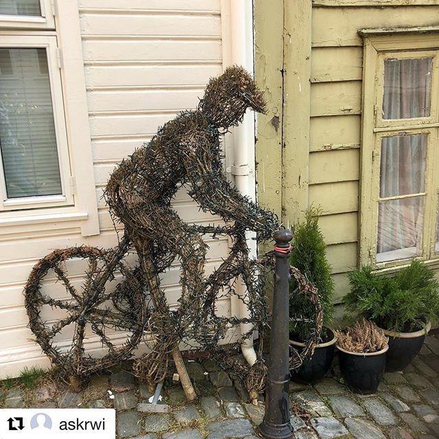 #Repost @askrwi with @get_repost  Evig syklist i Bergen #reiseliv #reisetips #reiseblogger