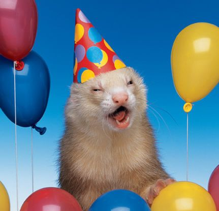 39 best bonne f te images – Ferret Birthday Card