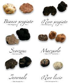 Truffles are manna from heaven!