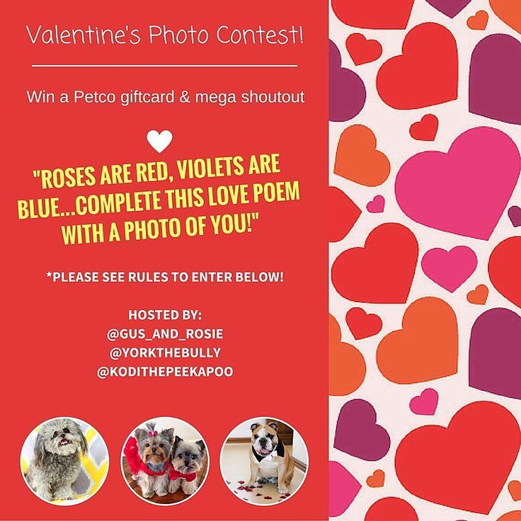 Contest time win a 75 dollar petco gift card contest
