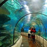 Aquarium of San Sebastian