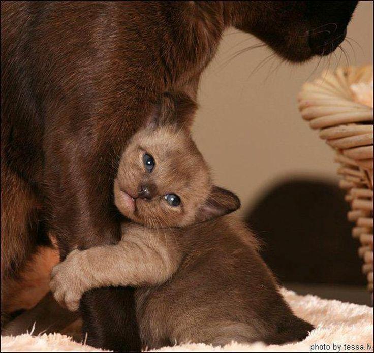 *** Nouvelle série : animaux et leurs petits *** - Page 13