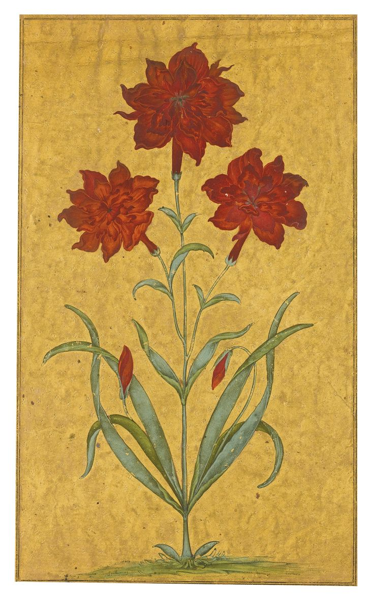 A carnation, attr. to Haider 'Ali and Ibrahim Khan, Deccan, Bijapur, ca. 1625-50. gouache, pricked gold background on paper.