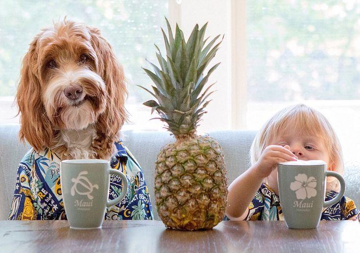 3-летний американский ребенок стал Интернет-знаменитостью благодаря своей собаке