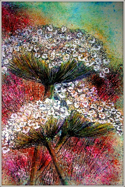 Louise Christian QUEEN ANNE'S LACE  PAINTED WITH MIXED MEDIA WATERCOLOR & INK & ELEGANT WRITER PEN