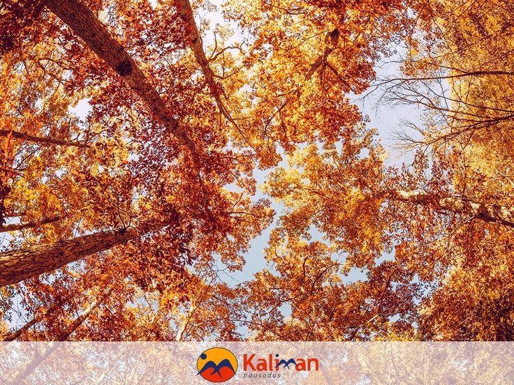 Viajar abre os seus olhos. E não há nada melhor do que realmente abrir os olhos. Campos do Jordão é o melhor destino para as estações de outono e inverno. Aqui a natureza encontra o refinamento e o charme. #CamposdoJordão #conforto #libardade #viagem #viajar #aventura #natureza #pousadaskaliman by pousadas.kaliman