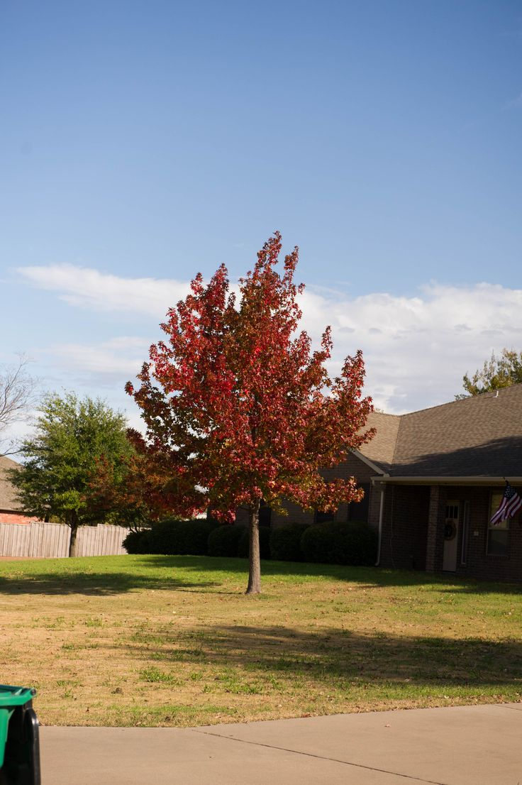 74 Best Trees In North Texas Images On Pinterest