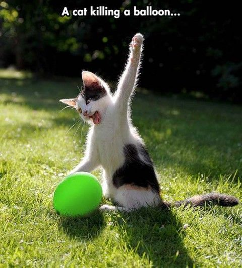 funny animals pictures with captions (72 pict) | Funny Pictures                                                                                                                                                                                 More