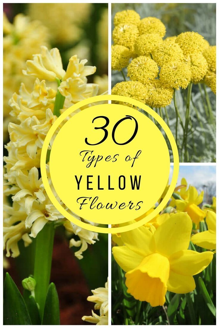 30 Types Of Yellow Flowers I Couldn T Ignore Anymore Flower Landscape Yellow Flowers Yellow Plants